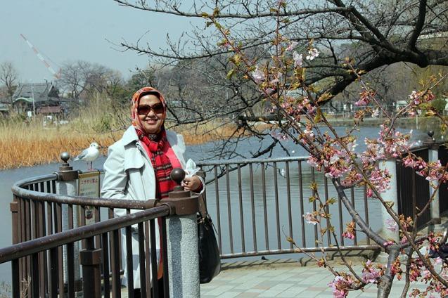 Sakura yang mulai berbunga lebih awal di Ueno Park