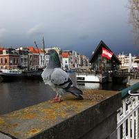 Leiden (95)